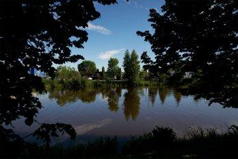 Tree-lined riverside