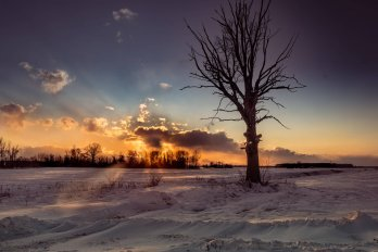 tree on a plain in winter