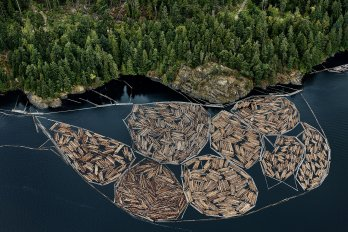 bundles of lumber on a lake
