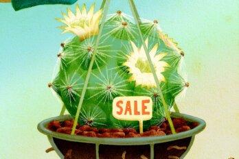 illustration of a cactus with a sale sign