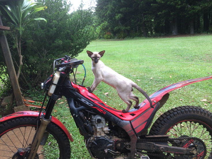Cat on a motor bike outdoors