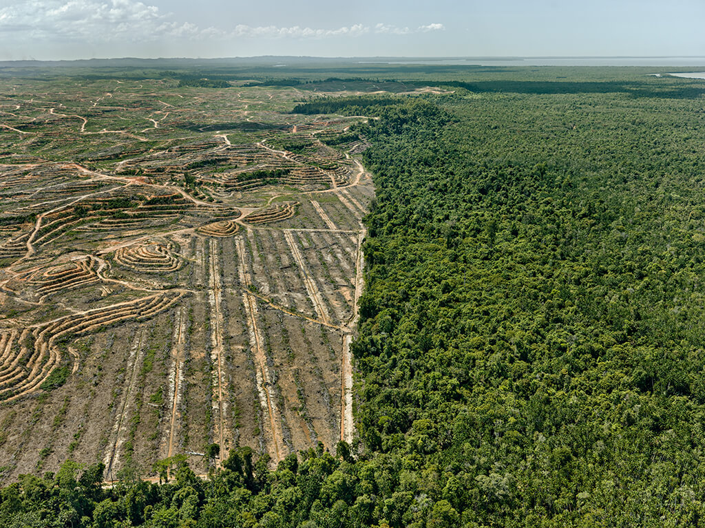 Clearcut photo of a palm oil plantation in Borneo.