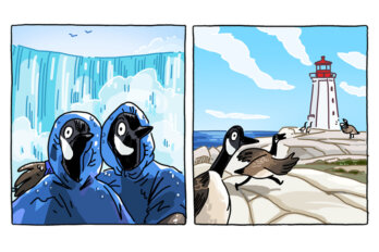 An illustration of Canadian geese vacationing in Niagara Falls and Peggy's Cove.