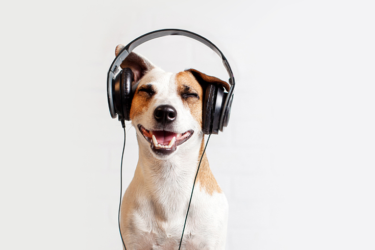 Photograph of a dog wearing large headphones and smiling.