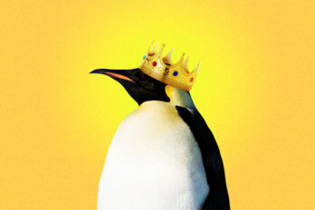 A penguin wearing a crown