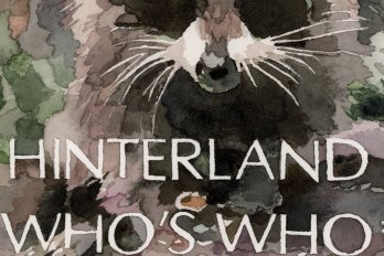 "Illustration of a racoon and the show title, ""Hinterland Who's Who,"" in white capital letters."