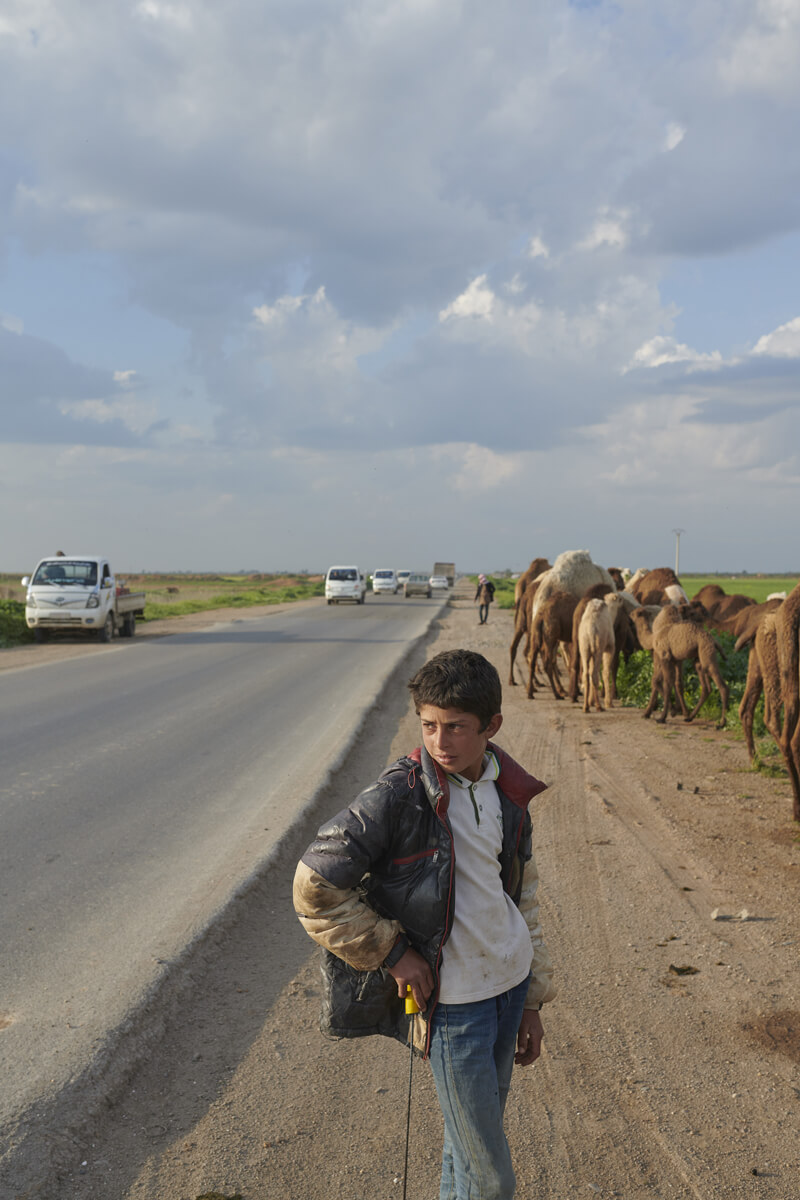 A young boy stands at the side of the road with a group of camels behind him.