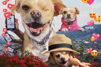 Collage of Erica's one-eyed dog Belle, superimposed on the Hollywood sign next to cell phones and heart emojis.