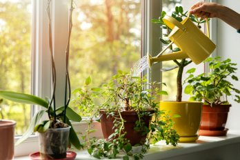 A hand holding a yellow watering can is watering indoor plants on a windowsill.