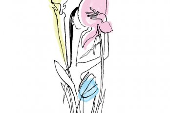 A women sticking her face in a flower