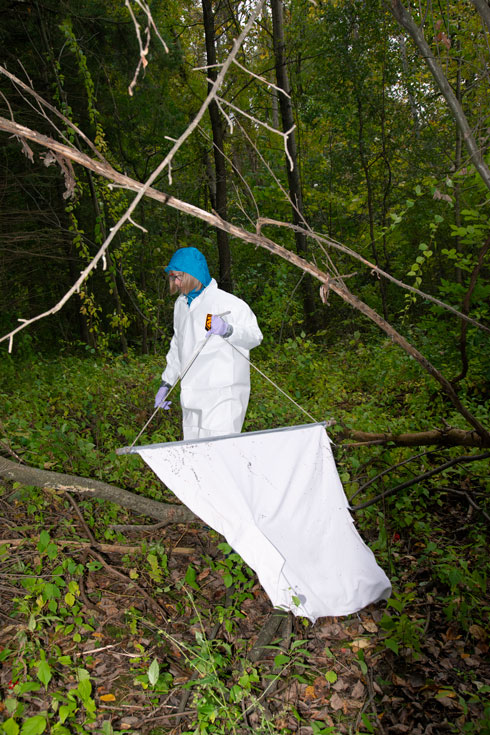 A woman, Katie Clow, wears a white full-body covering and carries a net to drag for ticks in a forested area