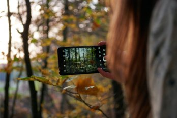 Over-the-shoulder photo of a woman holding a smartphone to take a picture of the autumnal forest around her.