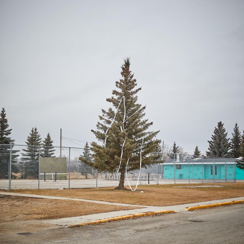 Tree strewn with toilet paper in Lanigan, Saskatchewan.
