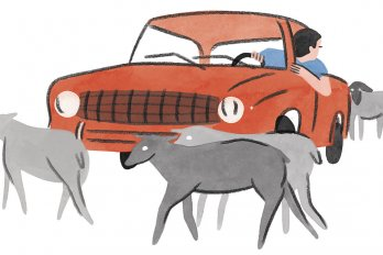 Illustration of Animals Crossing in front of a Car