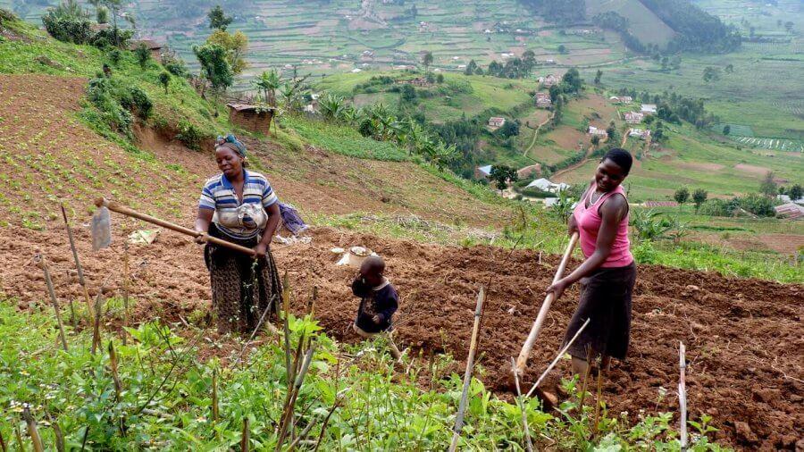 Woman Farming in Uganda