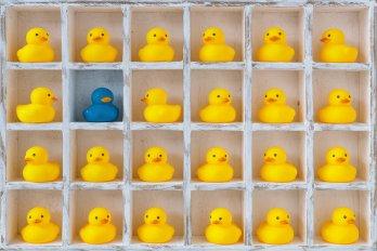 cupboard full of rubber ducks