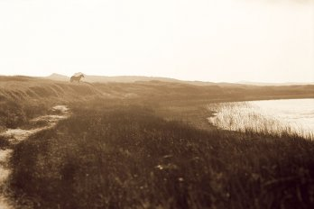 Photograph courtesy of Roberto Dutesco/Wild Horses of Sable Island Gallery, New York