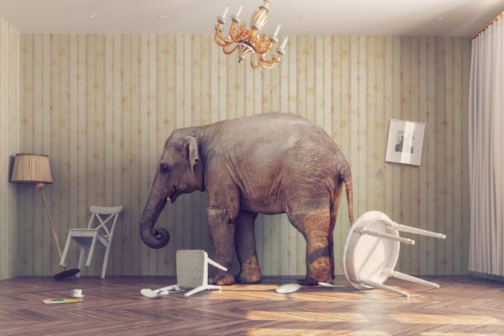 elephant destroys room but looks pretty content