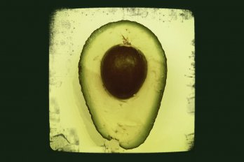 Photograph of avocado by woodleywonderworks