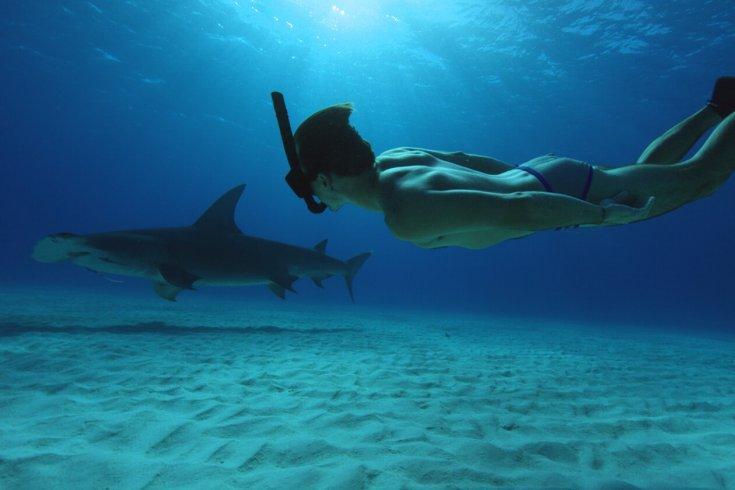Man swimming underwater beside shark