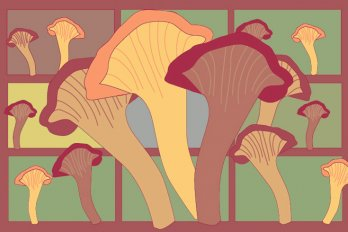 Illustration of mushrooms in various shades of orange and maroon.